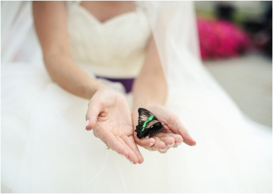 Vlinders loslaten op de bruiloft